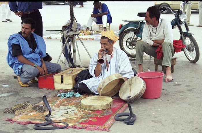 serpientes de jemaa el fna
